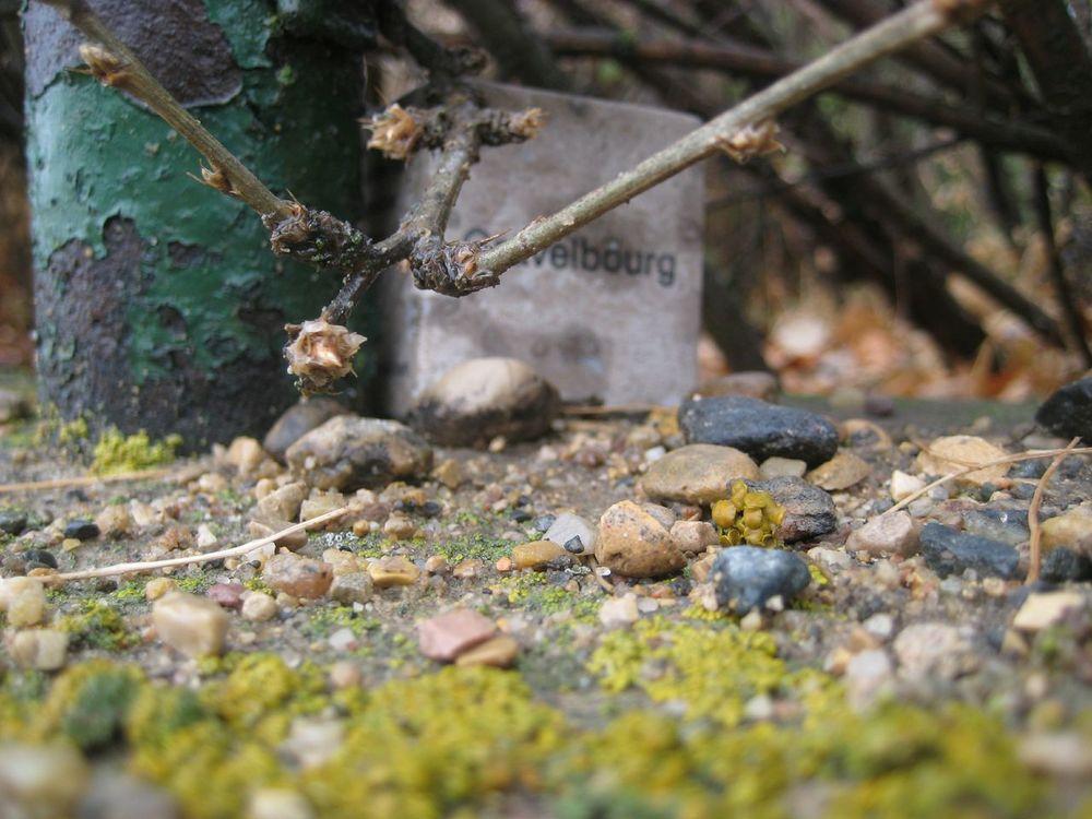"Hidden Tyndall | Gravelbourg by Terri Fidelak, 2012, engraved tyndall stone, 2""x2""x2"""