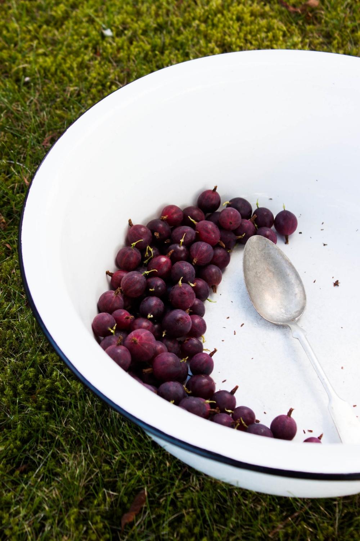 Gooseberry Clafoutis | My Blue&White Kitchen