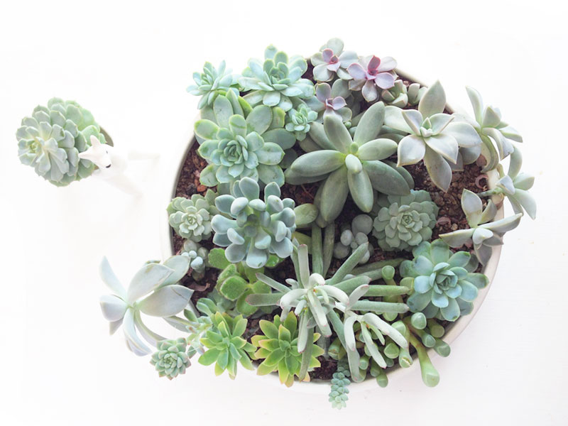 Grow choosing succulents that go together hello harriet for How do you take care of succulents