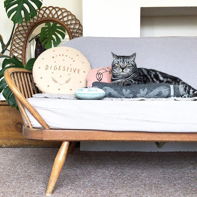 ICYMI I'm selling my ercol studio couch and arm chair ... dm for more details / to make me an offer. Would like £1200 ono for the pair * Yoshi not included #kingcatyoshi #ercolstudiocouch #ercolforsale #ercollovers #ercol #interiorporn #midcenturymodern