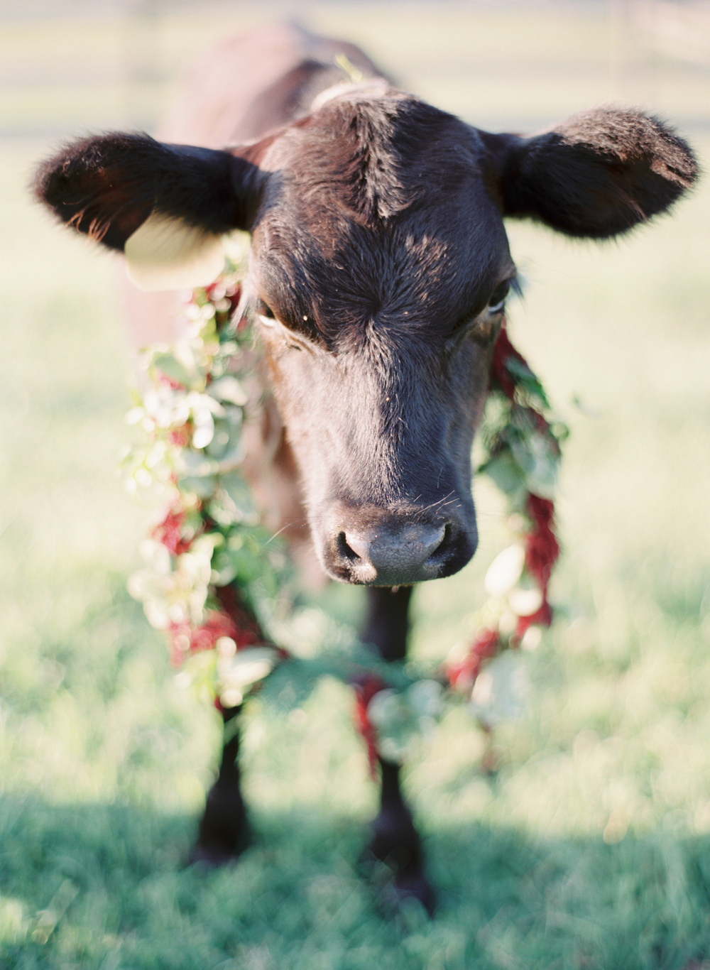 Cow in Nashville with Floral Wreath