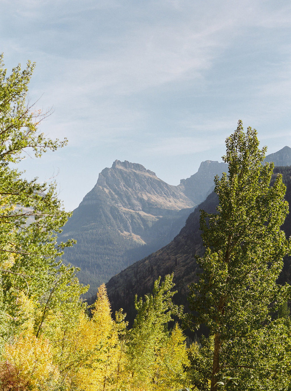 Glacier National Park // Aspens in the Fall