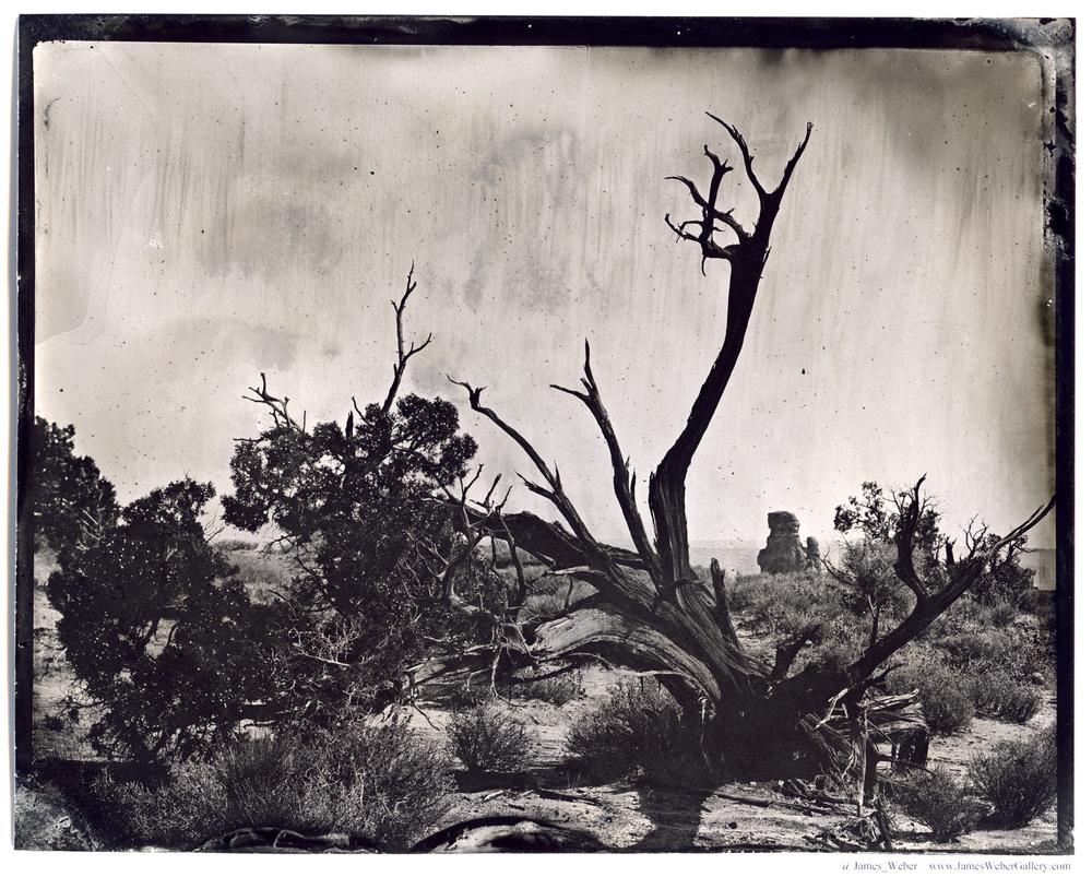 JAMES-WEBER-PHOTOGRAPHER-WET-PLATE-2014-00463.jpg