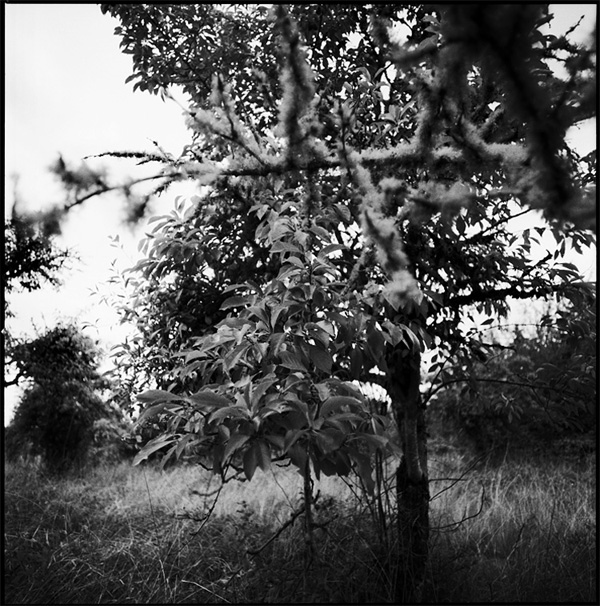 Daniel Schmeichler ( American, Washington )  from The Orchard Series  Black and White Photograph  $3,000 Framed