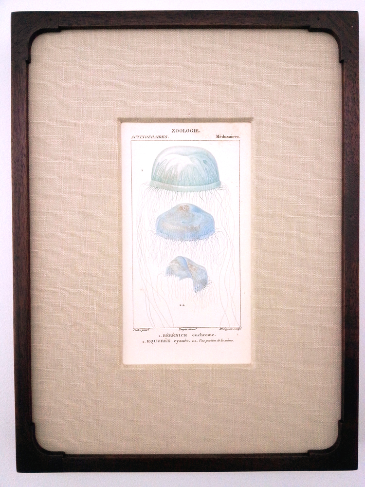 "Antique French Engraving  14 1/4"" (H) x 10 3/4"" (W) Frame O.D.  Regular $760 / SALE $380"