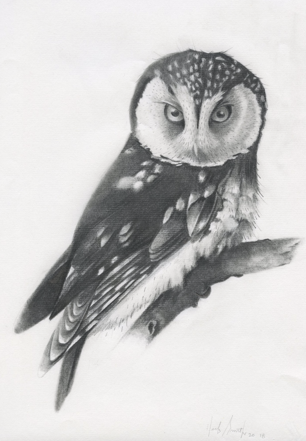 Herb Smith (American, b. 1981)     Boreal Owl  (2018)    Graphite on Paper    $430
