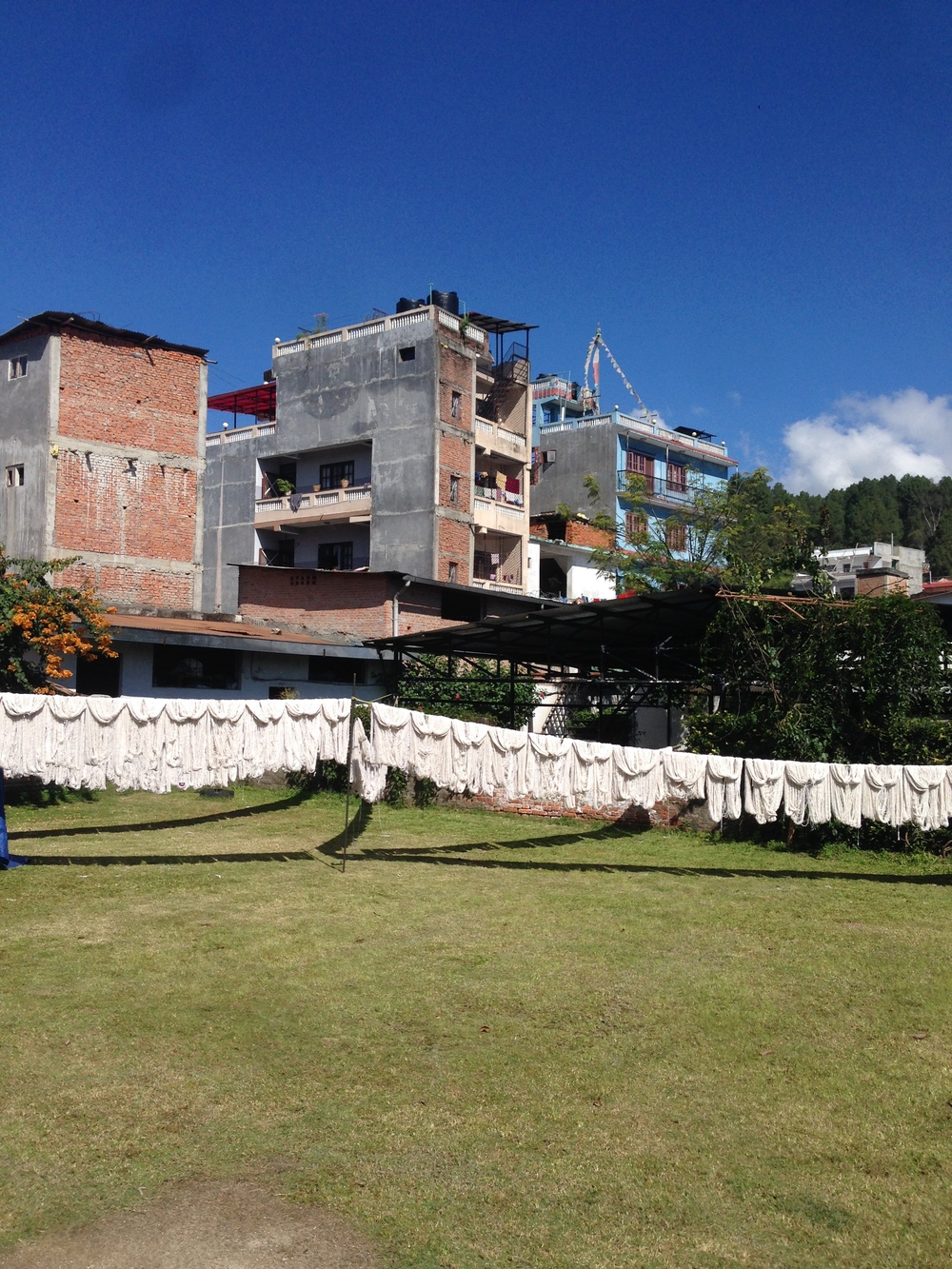 Drying wool in the sun