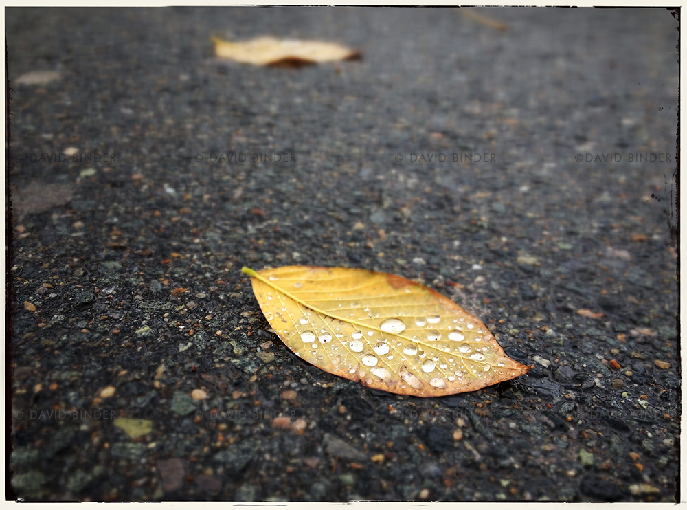 boston_leaf_raindrop_5773.2.jpg