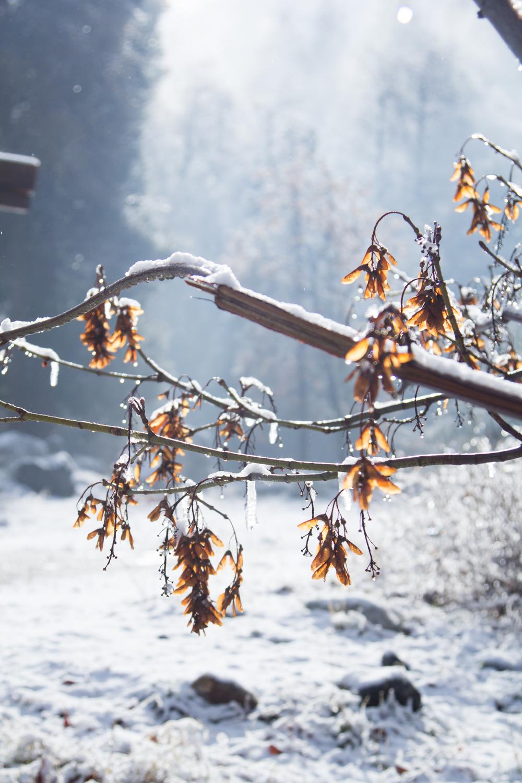 Snow-59.jpg