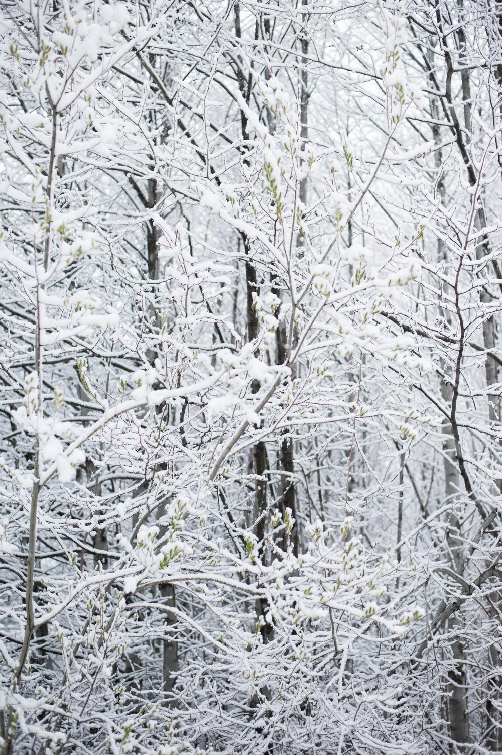 March 2 Snow-1.jpg