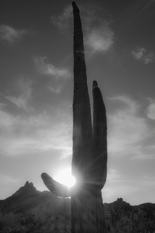 Scottsdale-29.jpg
