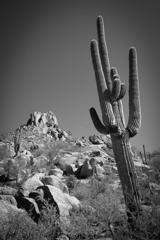 Scottsdale-40-2.jpg
