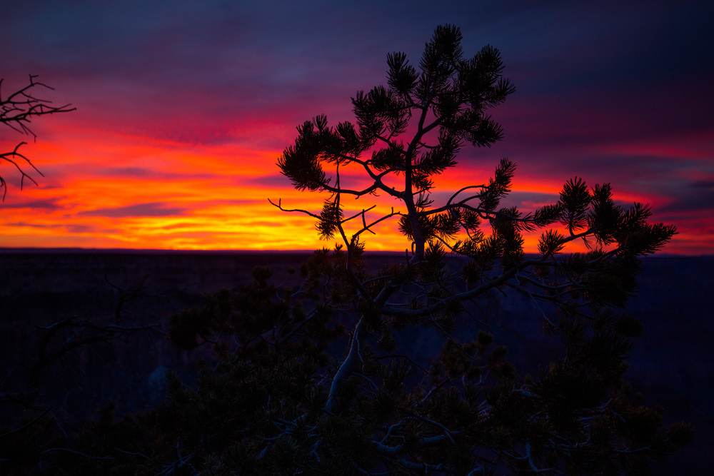 Grand Canyon-388.jpg