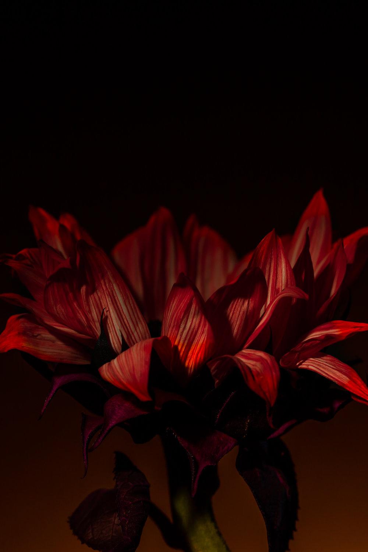 Lily Orange-16-3.jpg