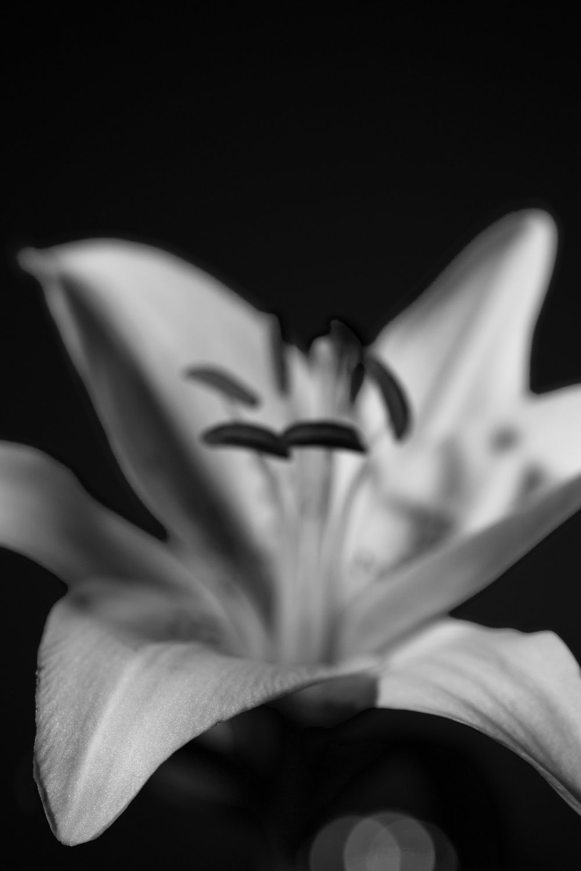Lily Orange-20-2.jpg