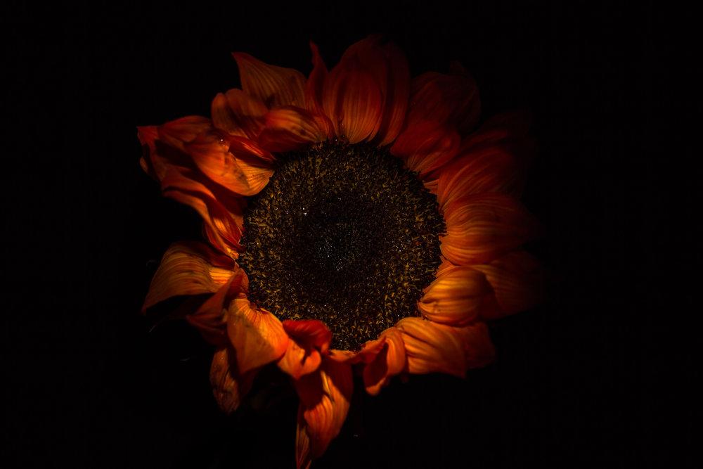 Lily Orange-21-4.jpg