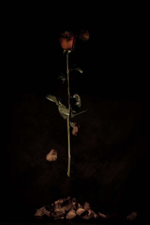 Roses -40-Edit.jpg