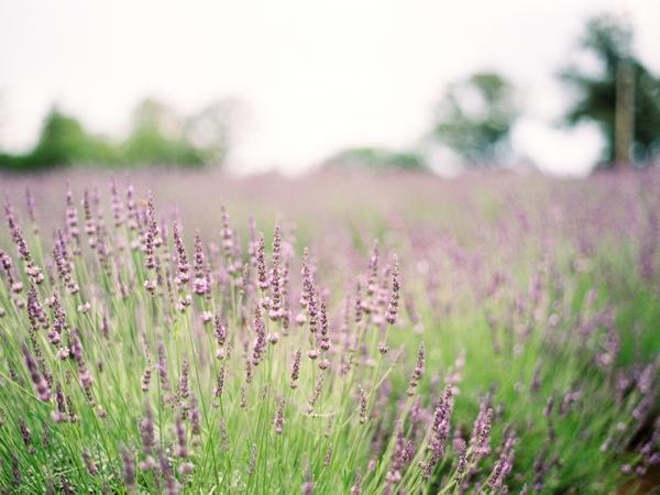 wedding-venue-lavender-farm