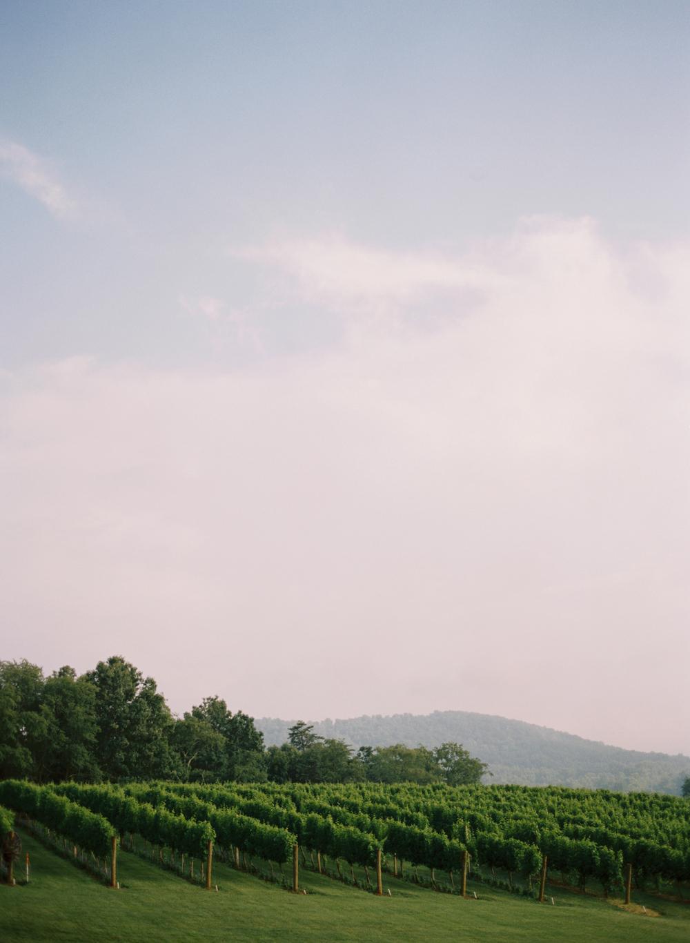 charlottesville-virginia-vineyard-elisa-bricker