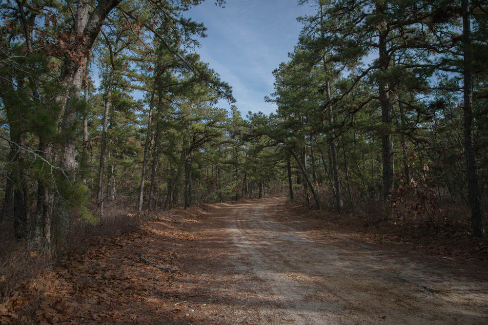 Pine-Barrens-Dryland_Run-November 30, 2013-10.jpg