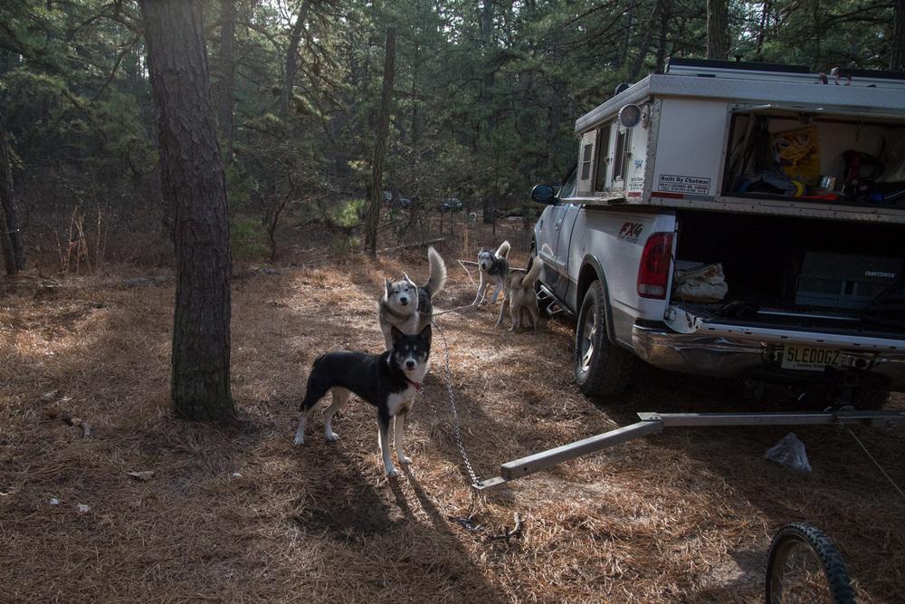 Pine-Barrens-Dryland_Run-November 30, 2013-8.jpg