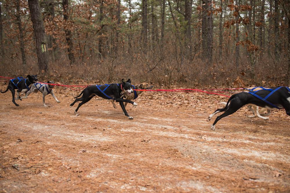 jssdra-race-2014-18.jpg
