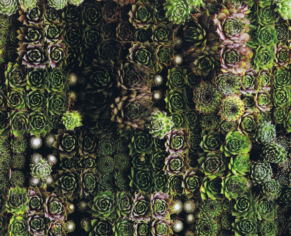 sedum art wall.jpg
