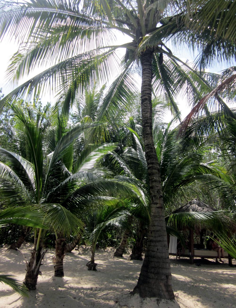 cozumel palms.jpg