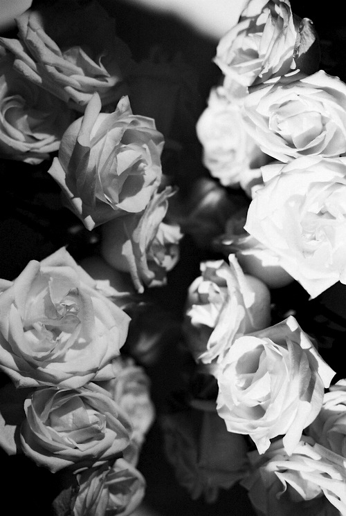 tumblr backgrounds black and white roses 12529 loadtve