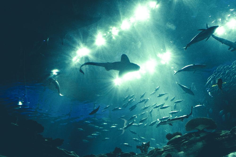 ITAP fish.jpg