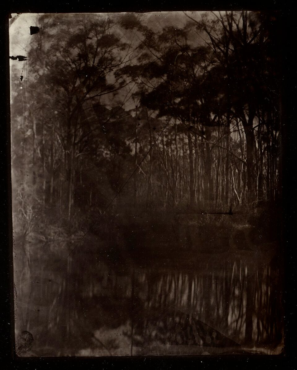 "Lake and Trees, Blue Mountains"" Alex Bishop-Thorpe, Gold toned Collodio-Chloride print, 8.5x11cm"