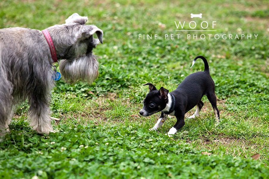 dog_park1