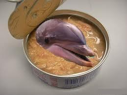 dolphin_tuna.jpg