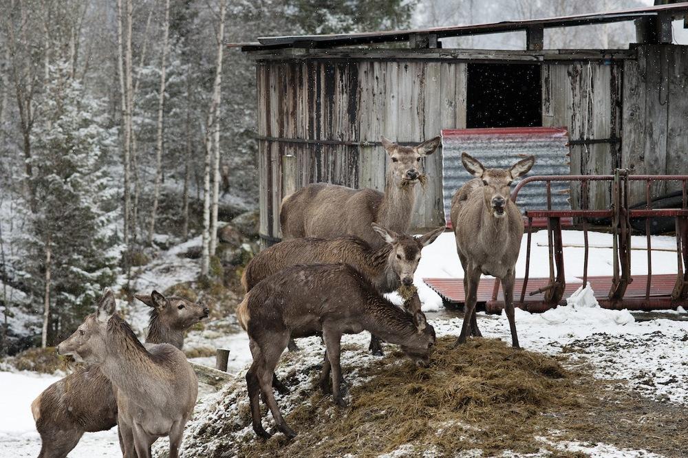 SØSKEN TIL EVIG TID_Hjort     Last ned BILDE