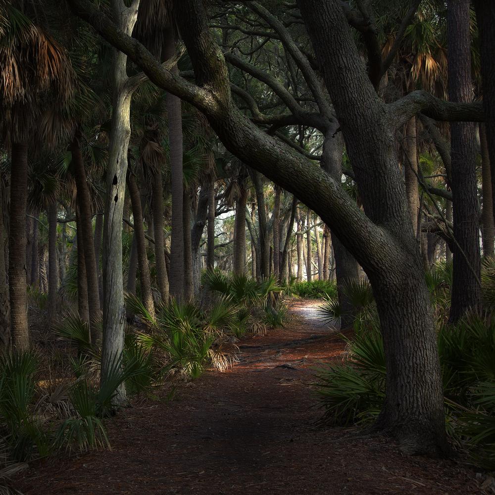 Path, Hunting Island, SC