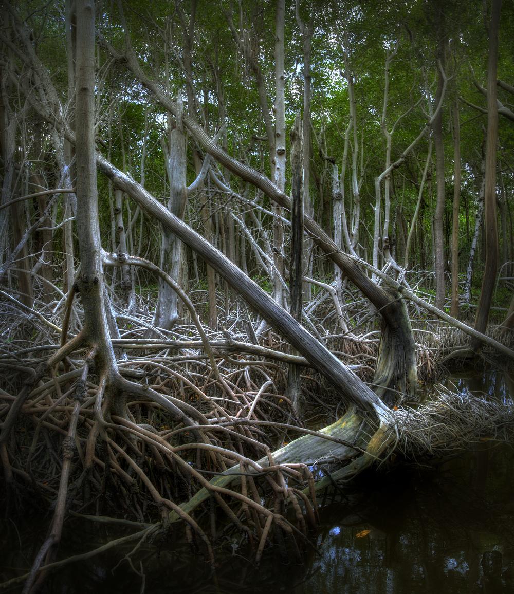 Mangroves 2 Glamour Glow darkened.jpg