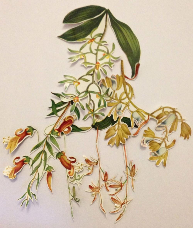 flora2.jpg