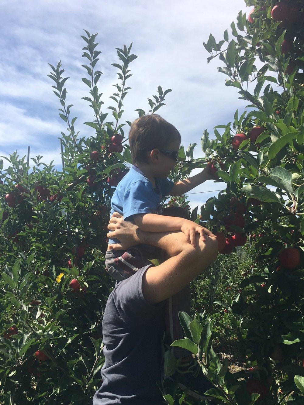apple_picking_fall_autumn_family