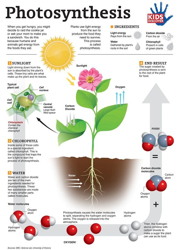 photosynthesis infographic.jpg