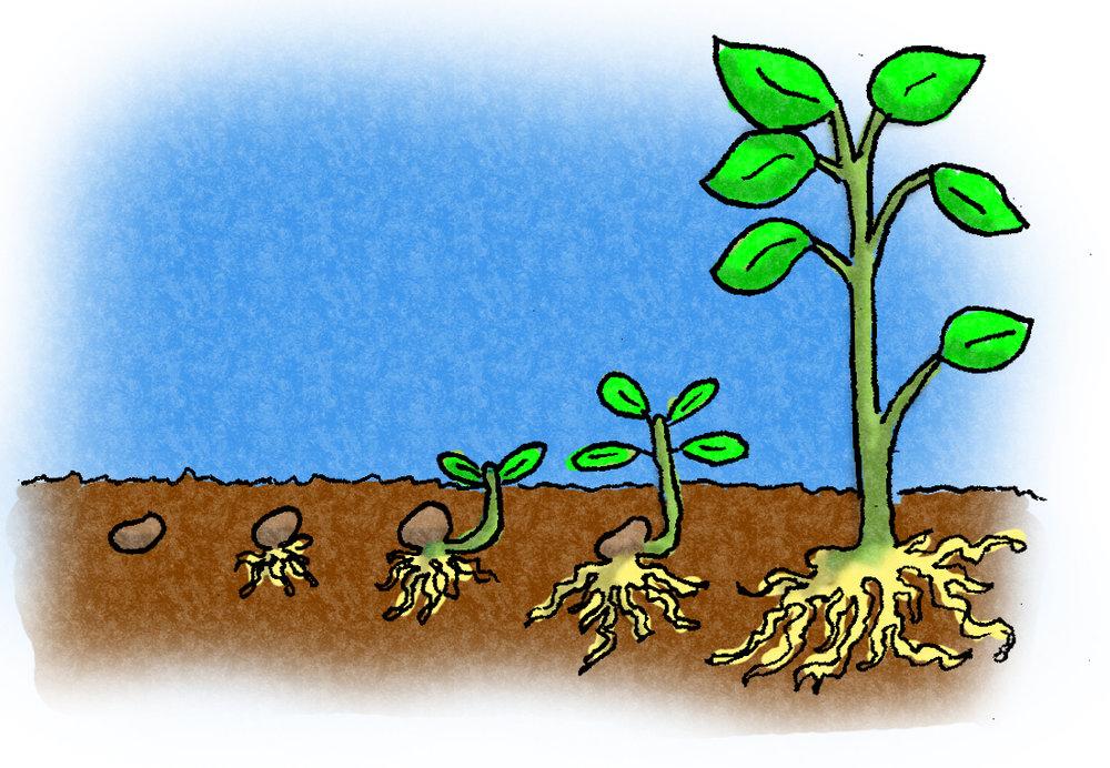 PlantLifeCycle.jpg