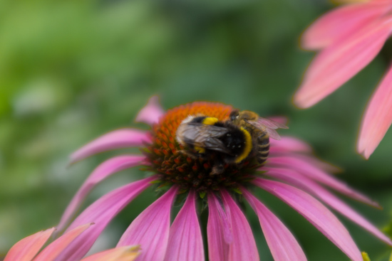 flower with bee.jpg