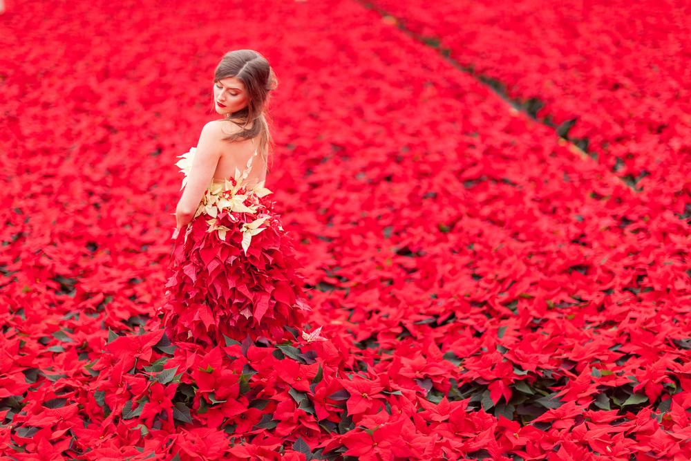Okishima & Simmonds International Poinsettia Day_Julian Winslow Photography