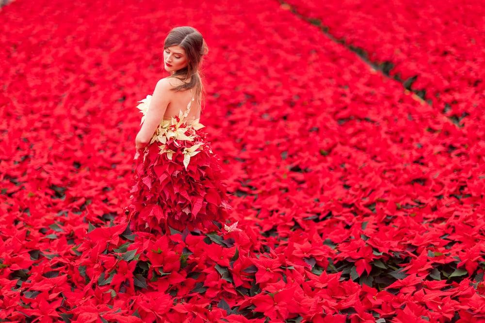 Okishima & Simmonds_International Poinsettia Day_Julian Winslow Photography