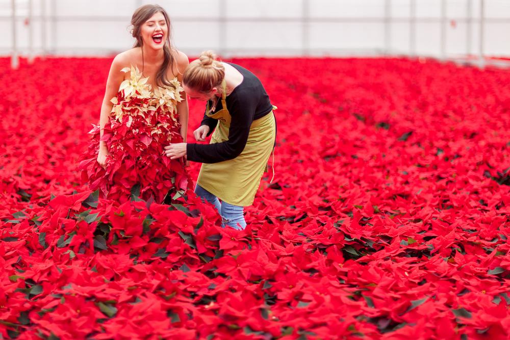 International Poinsettia Day