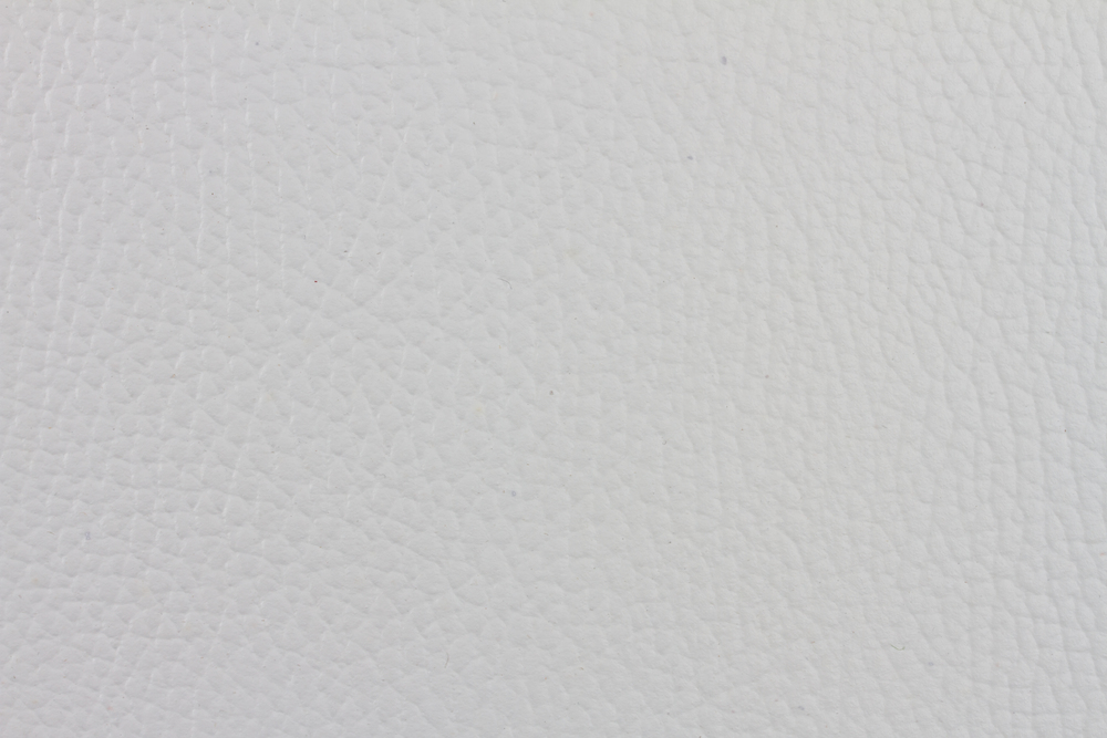 White Walrus (2).jpg