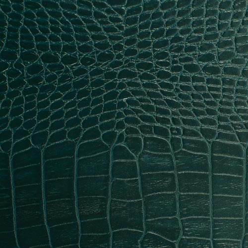 Coastal Crocodile