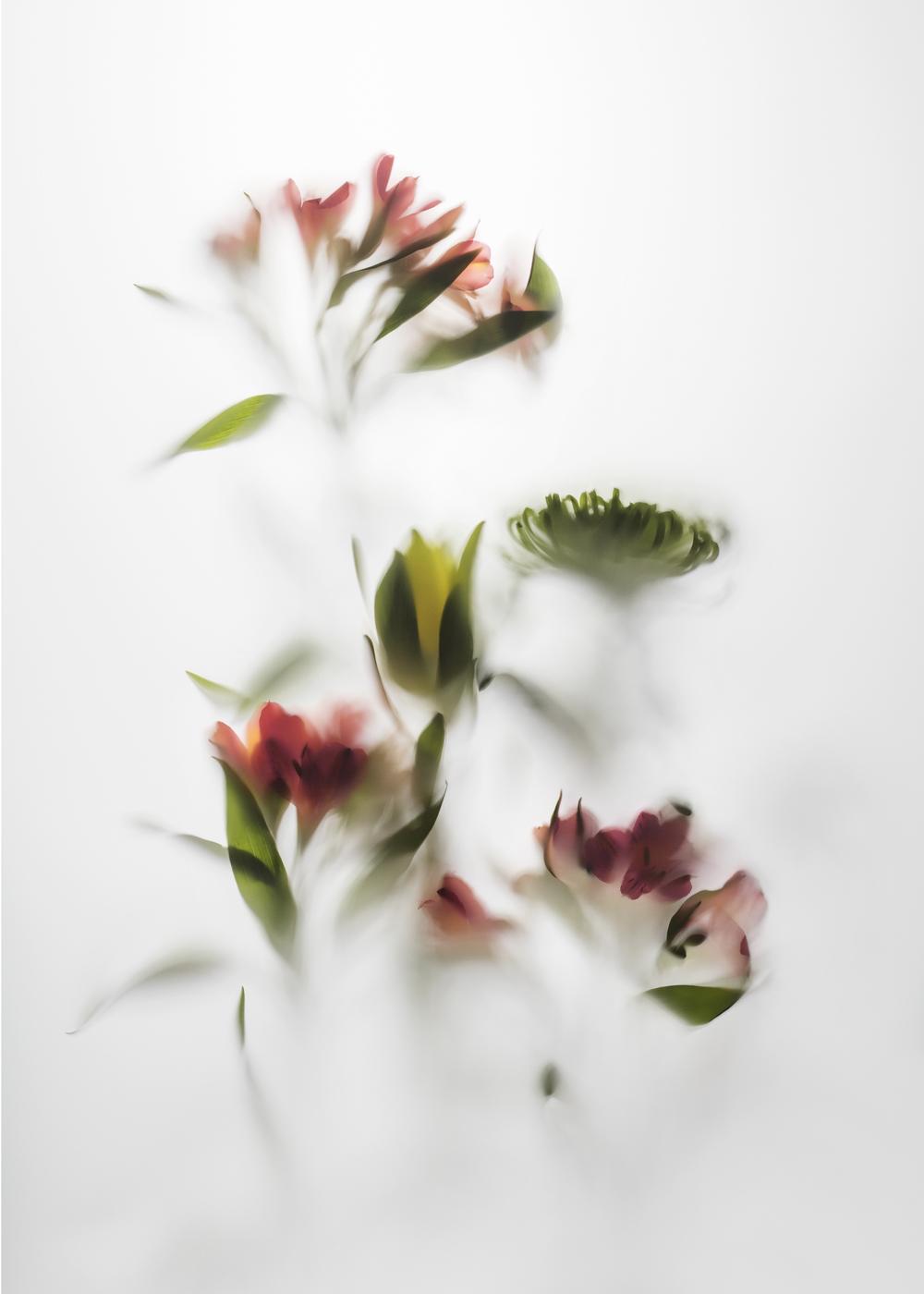 Blommor / stilllife