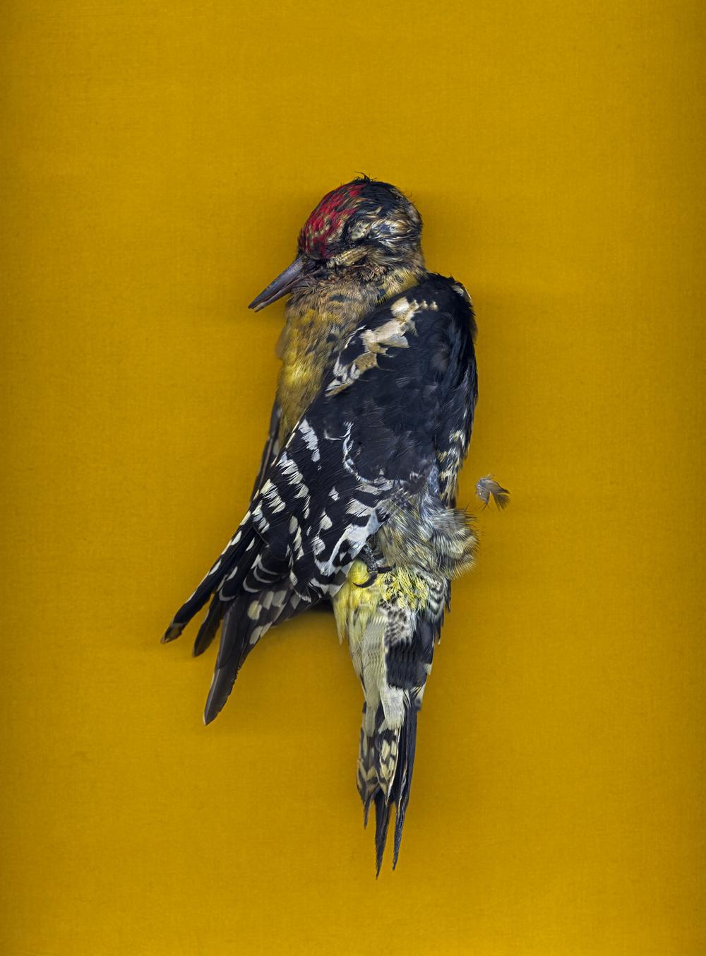CALDWELL_UNTITLED_(yellow bird)_24x20_2011.jpg