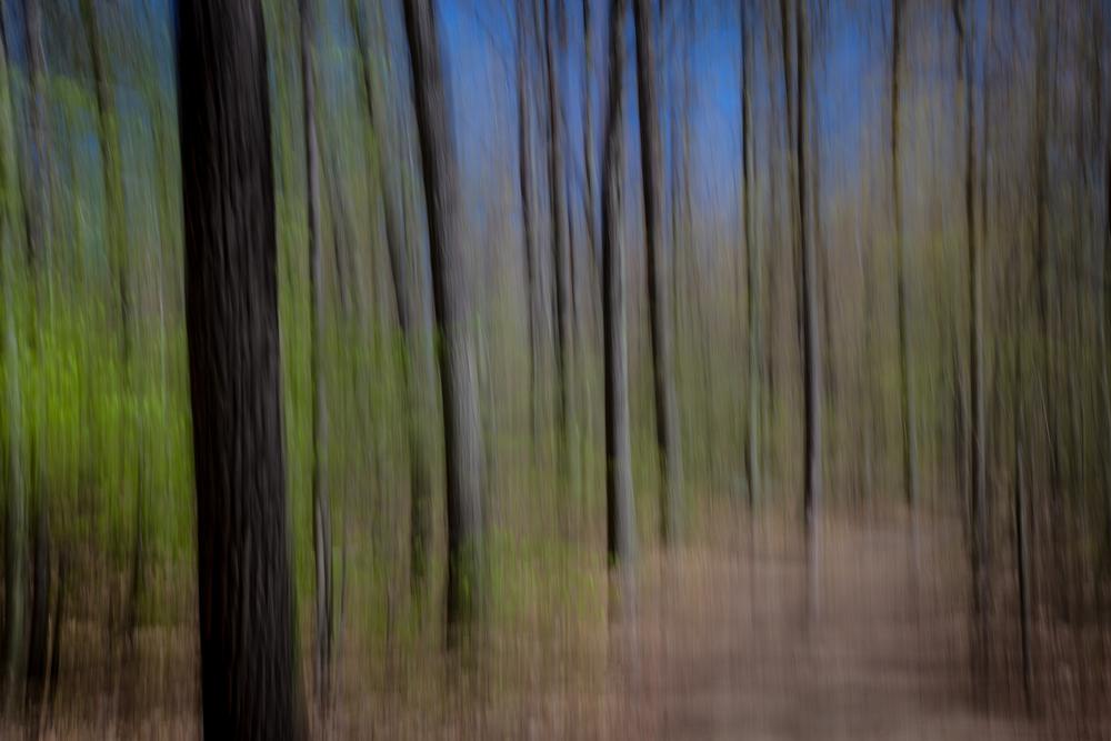 Woodland Impression - Spring