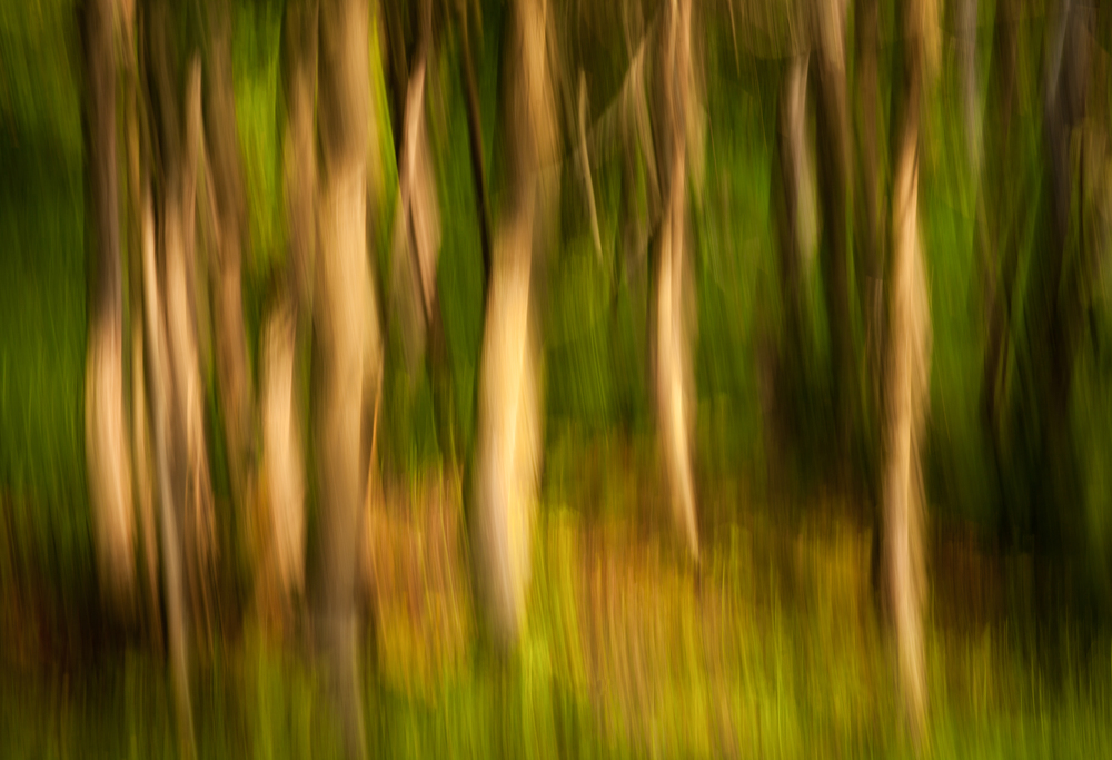 Woodland Impression - Summer